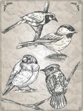 Set of birds. Vector illustration stock vector