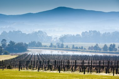 Foggy Yarra Valley During Winter