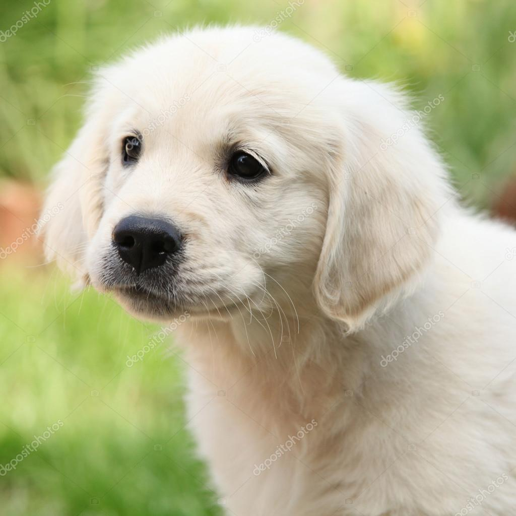 Low Price Dog Breeds