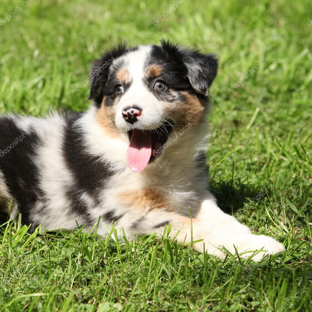 Adorable puppy lying in the garden