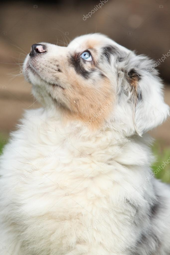 Nice puppy with blue eye