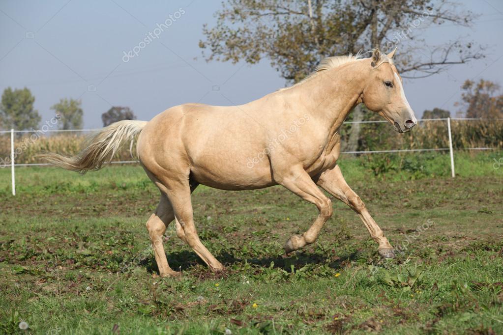 Imágenes: caballos cuarto de milla   caballo cuarto de milla ...