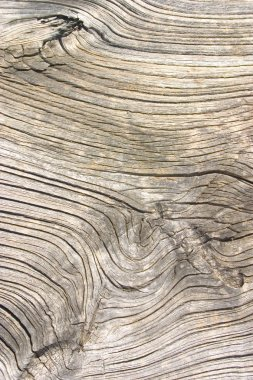 Old wood texture, cut a wooden board