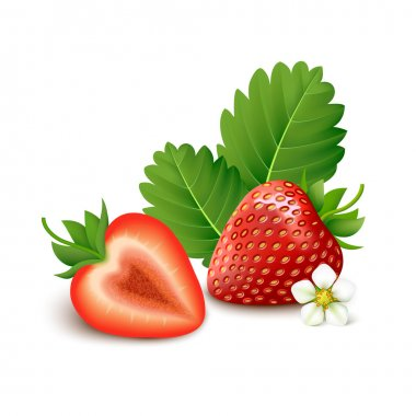 Strawberry on white background. Vector illustration