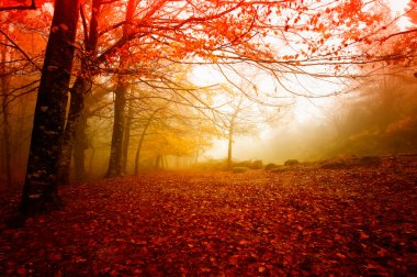 Gerdens N. P. Portugal in beautiful Autumn colors stock vector