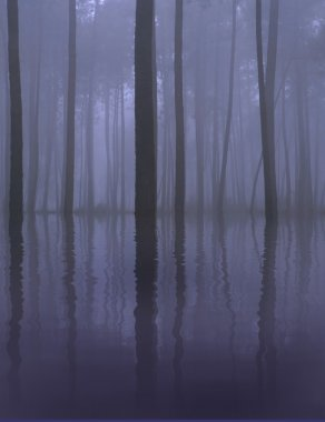 Morning mist wallpaper