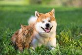 pes a kočka. přátel