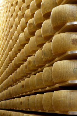 Wheels of cheese on the racks of a maturing storehouse