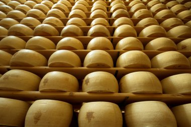 Vertical view of a heap of freshly made wheels of cheese