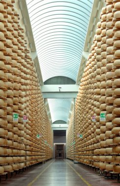 Maturing storehouse of Italian typical parmesan cheese