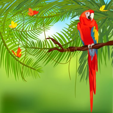 rainforest and parrot