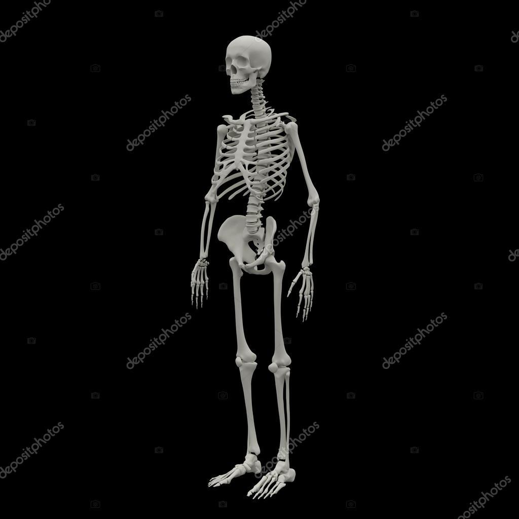 3d Rendered Skeleton On A Black Background Photo By Maya2008