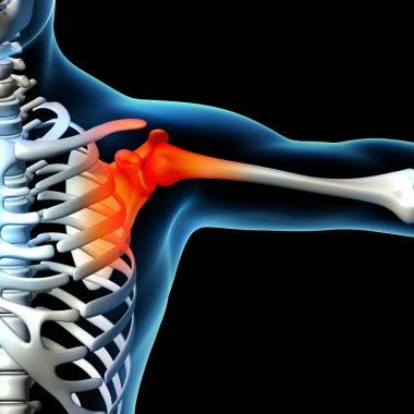 Human shoulder pain with the anatomy of a skeleton shoulder