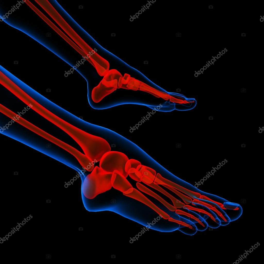 Human Foot Pain With The Anatomy Of A Skeleton Foot Stock Photo