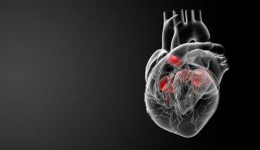 3d render Heart valve - side view