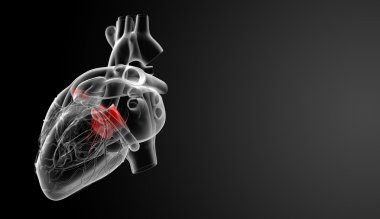3d render Heart valve - back view