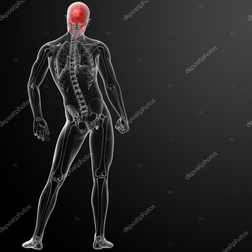3d render human skull anatomy — Stock Photo © maya2008 #42884441