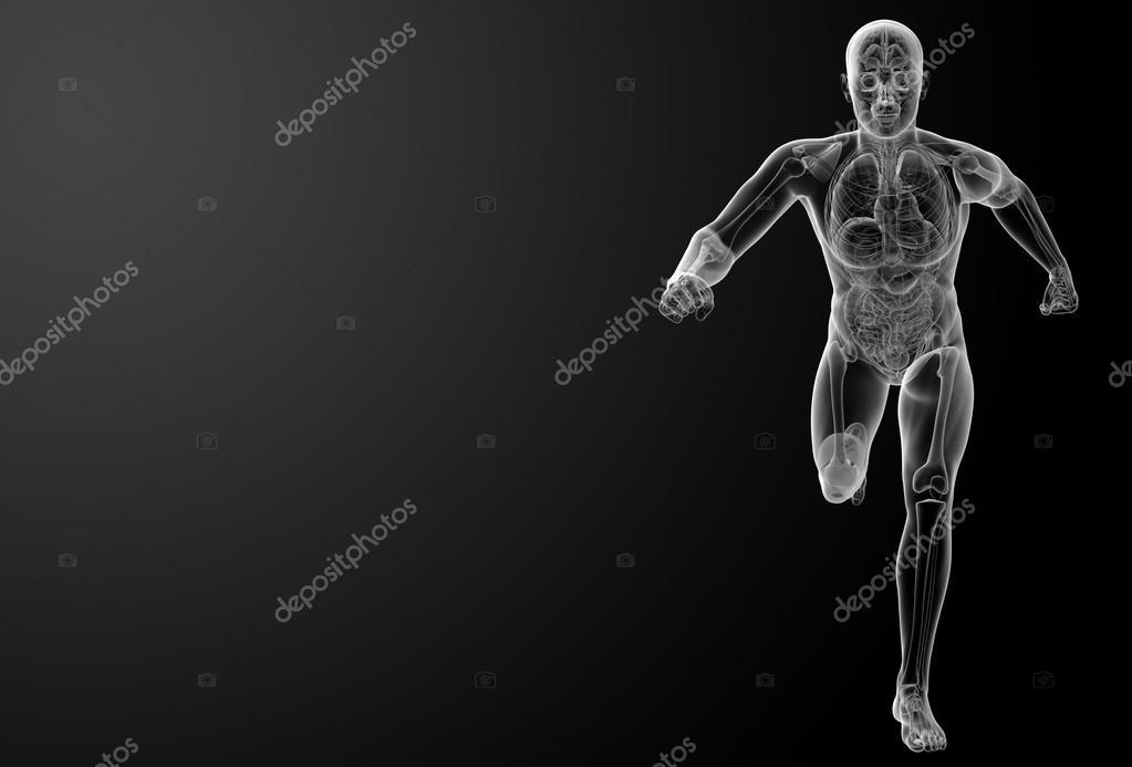 ejecutando la anatomía humana por rayos x — Fotos de Stock ...