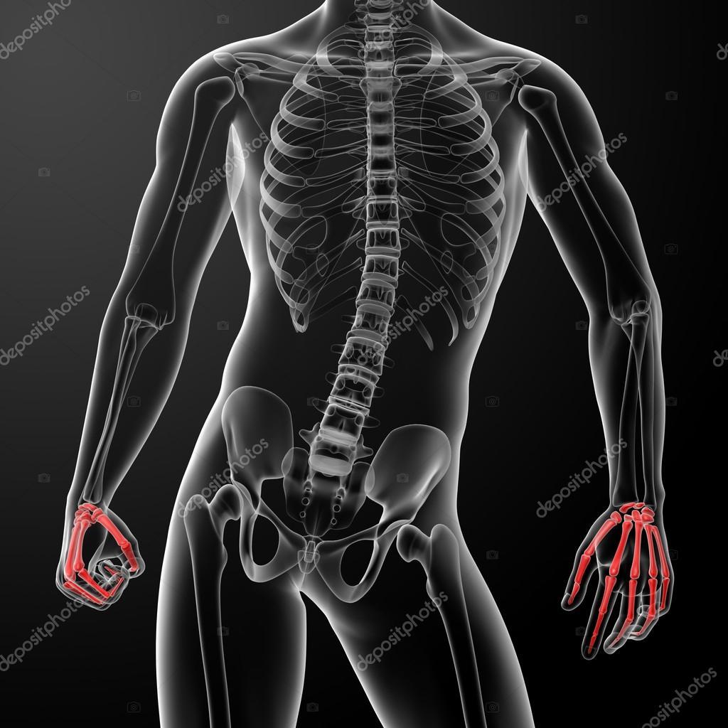 3d Render Skeletal Hand Stock Photo Maya2008 42884853