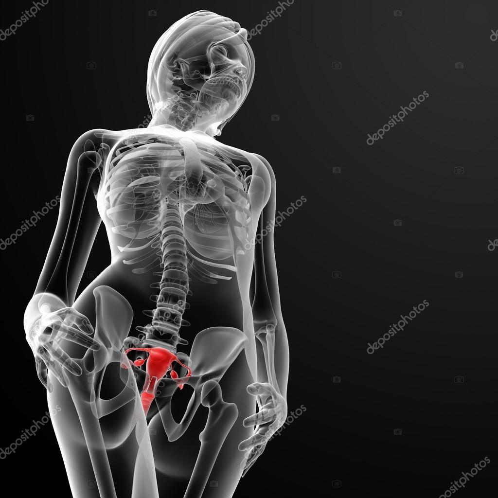 Рентген члена во влагалище фото супер