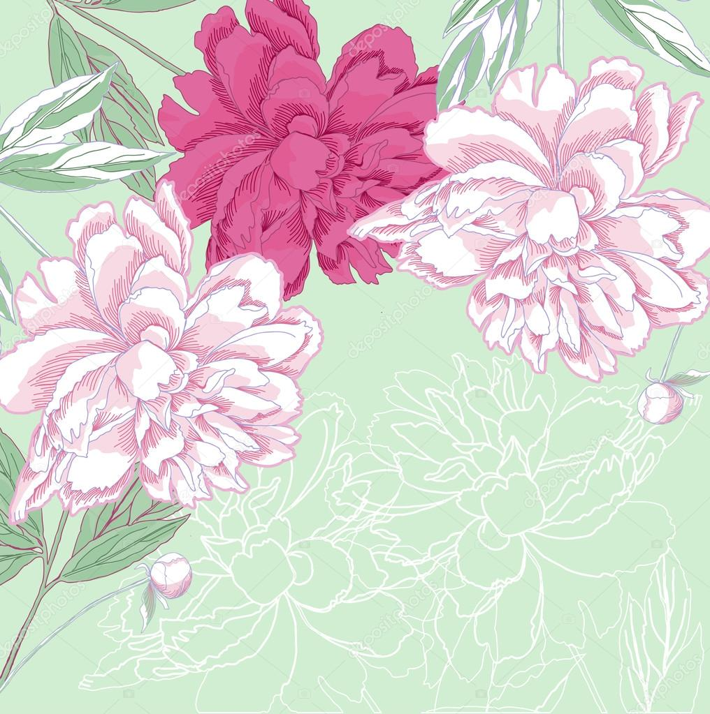 Background with white and pink peony