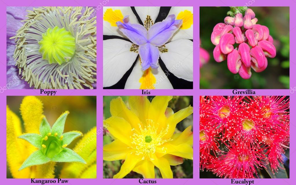 Colourful Collage Of Flowers With Their Names Stock Photo C Kez53