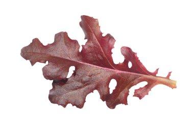 Single red gourmet lettuce leaf