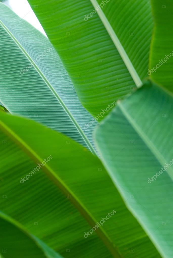 Banana leaf in layers