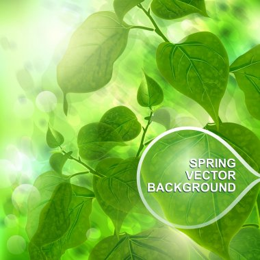Green spring trees background. Vector illustration.