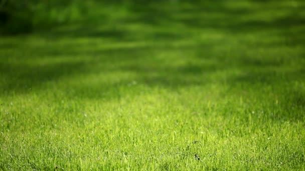 tavaszi fű