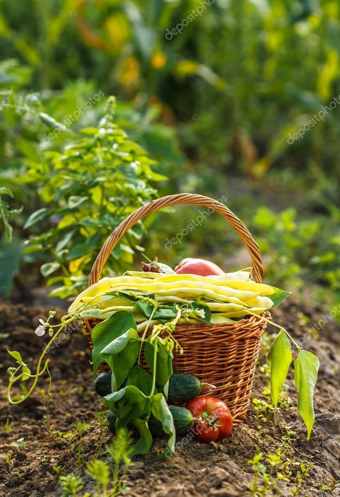 Vegetables harvest