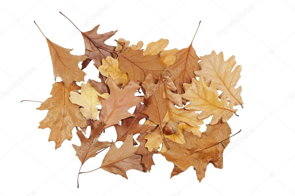 Букет из листьев дуба