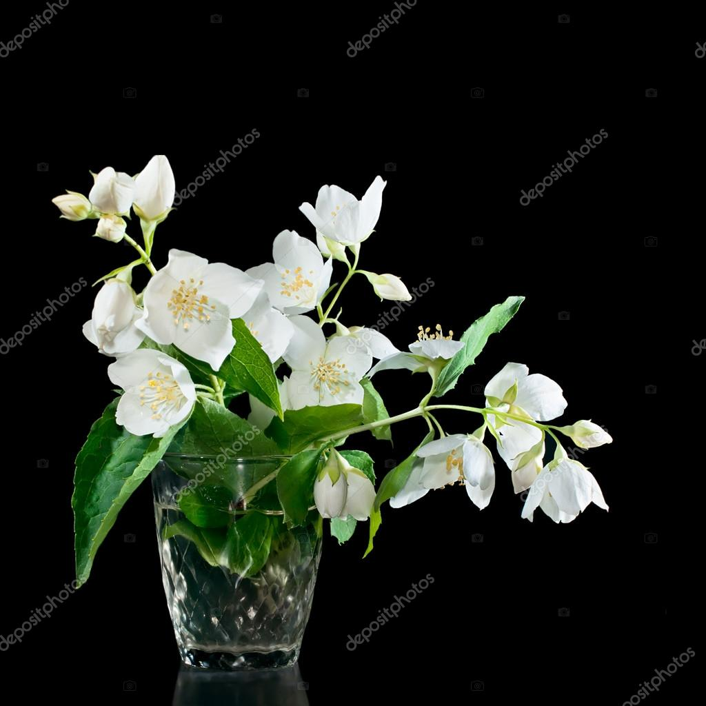 Bunch Of Jasmine Flowers On A Black Background Stock Photo