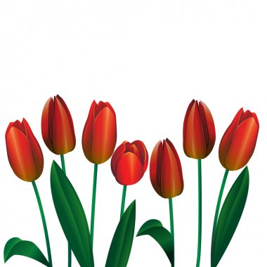 Bouquet of red tulips 4