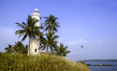 Old lighthouse on a background of blue sky is surrounded by palm