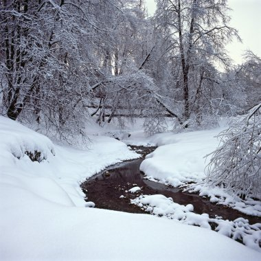 Trees in snow, Kolomenskoe, Moscow, Russia