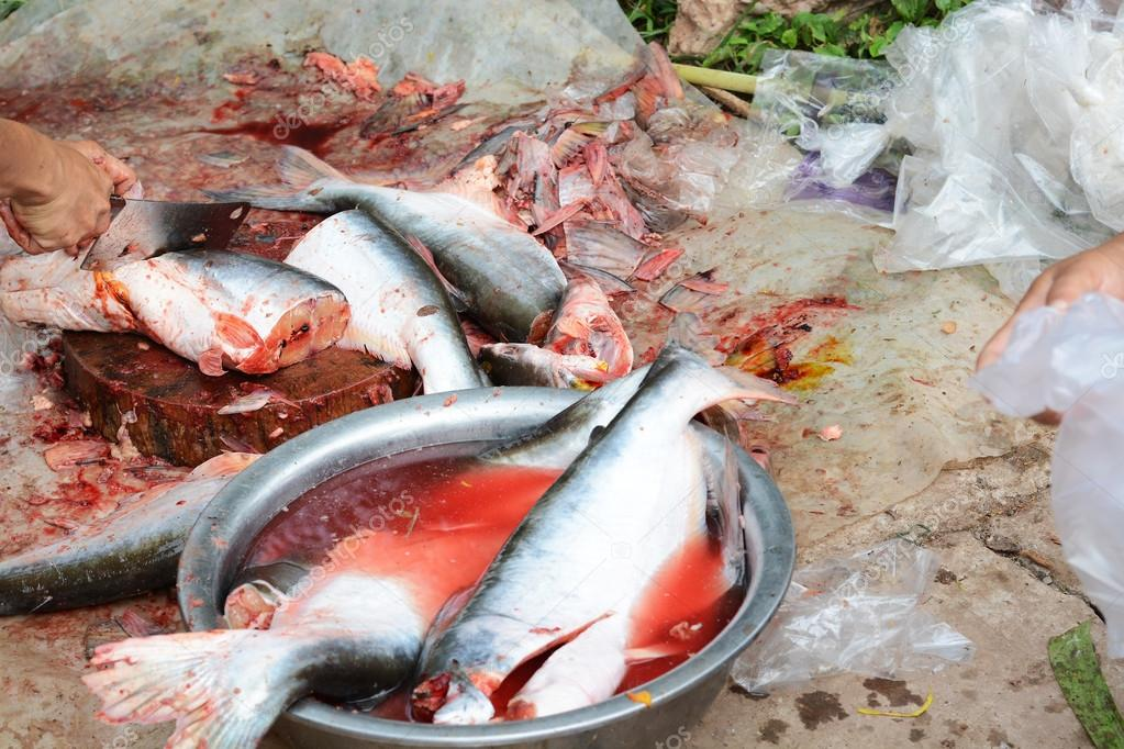 Dissected pangasius fish stock photo jcomp 31605731 for What is pangasius fish