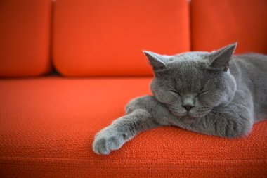Grey cat sleeping on a couch. stock vector