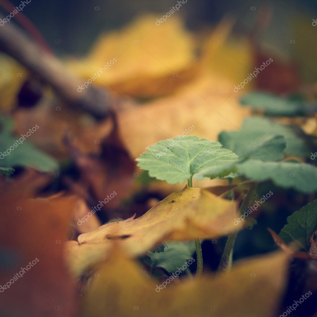 Фотообои Nature vintage background