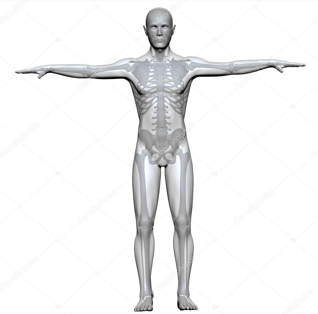 X-ray of a human body and skeleton — Stock Photo © vampy1 #24884423