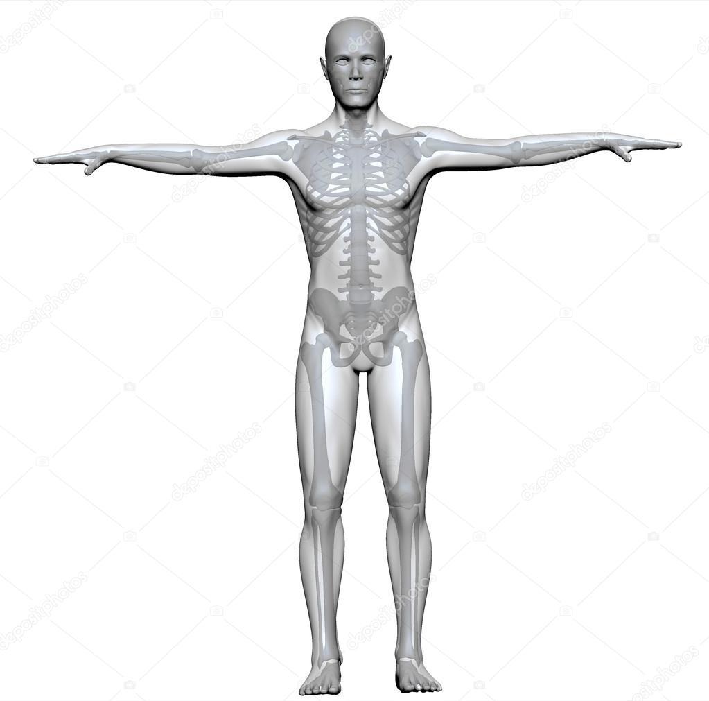 x-ray einen menschlichen Körper und Skelett — Stockfoto © vampy1 ...