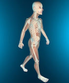 X ray of human body and skeleton