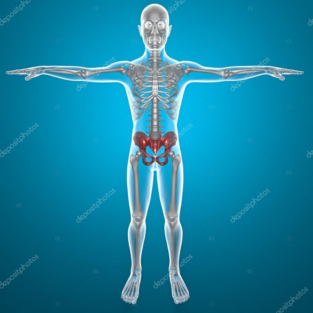 Becken Becken menschlichen Körper Röntgen — Stockfoto © vampy1 #29805473