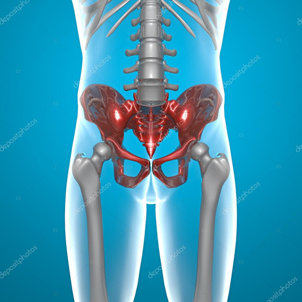 Becken Becken menschlichen Körper Röntgen — Stockfoto © vampy1 #29805607