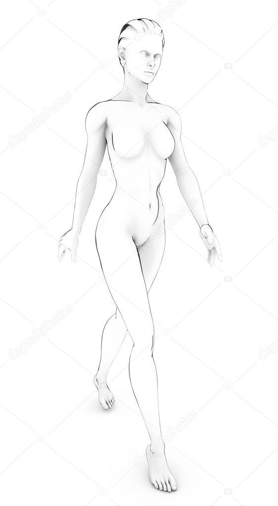 Anatomia Mujer Dibujo Dibujo Dibujo De Mujer Cuerpo Humano