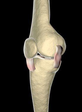 Knee ligaments, tendons, x-ray
