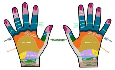 Reflexology handheld
