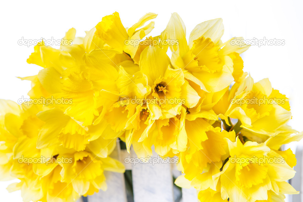 Ramo De Narcisos Ramo De Narcisos Amarillos Foto De Stock - Narcisos-amarillos