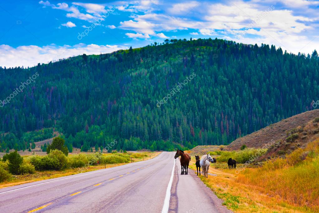 Horses enjoy the peace in Yellowstone National Park,USA