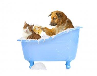 Cat Wash